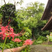 萩、彼岸花…秋の訪れを感じに。初秋の《鎌倉さんぽ》モデルコース