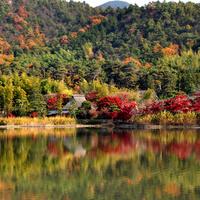 錦絵のように素晴らしい景色を訪れませんか? 京都市の紅葉名所~嵯峨野編~