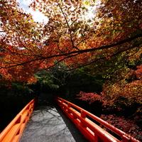 錦絵のように素晴らしい景色を訪れませんか? 京都市の紅葉名所~高雄編~