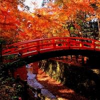 錦絵のように素晴らしい景色を訪れませんか? 京都の紅葉名所~洛中・洛西編~