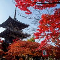 錦絵のように素晴らしい景色を訪れませんか? 京都の紅葉名所~洛東編~