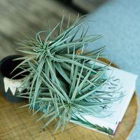 グリーンライフ、始めませんか?《種類別》植物の素敵な取り入れ方・飾り方