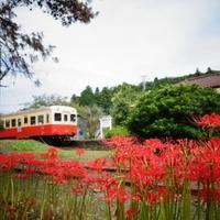 【関東】1度は訪れたい!秋の「絶景スポット」&おすすめ「列車の旅」8選