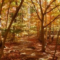 都内からプチ女子旅♪自然いっぱいの「清里」へ秋を探しに出かけよう