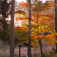 てくてく秋色探しに。《山・渓谷・湖》東京から日帰り◎紅葉スポット(見ごろ情報付)