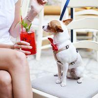 いつだって一緒がいいね♪愛犬家さんにおすすめの都内のドッグカフェ【5選】