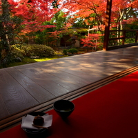 黄色とオレンジ、抹茶色。《大人の京都》紅葉とお茶席を楽しめるお寺巡り
