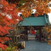 紅葉も海もお食事も。ゆっくり過ごしたいdeepな【鎌倉・長谷寺】案内