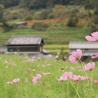 秋は、野花と史跡をめぐる旅へ。飛鳥時代の歴史ロマンが感じられる奈良【明日香村】