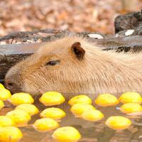 菖蒲とゆずだけじゃないんです。日本の「季節湯」で、もっとお風呂を楽しもう