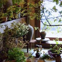四季折々の草花を和の心でしつらえる。京の花屋「みたて」