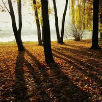 自然が作るアートにうっとり。「影」を写した写真に挑戦してみよう!