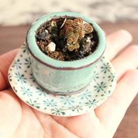 若い人にこそ伝えたい!「小さな盆栽」の魅力とは?~まめ盆栽、苔盆栽などの見所大公開
