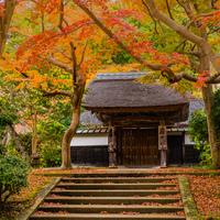 アジサイだけじゃありません♪ 紅葉のキレイな鎌倉で「お抹茶を楽しめるお寺」5選
