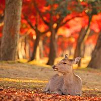 秋深まる【奈良】で、紅葉と美味しいスイーツを堪能しませんか?