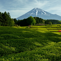 富士山と茶畑が広がるお茶のまち。風味豊かな本格「静岡茶」が味わえる和カフェ5選