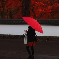 """南禅寺から祇園へ。秋冬にしっとり楽しむ """"わたしの京都旅"""""""
