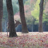 『あをによし奈良の都』へ~かわいい鹿と戯れるほっこり旅~