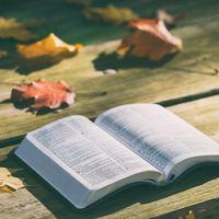 秋の夜長に心があたたまる本を。せつなくて優しい、おすすめの小説・漫画をご紹介します