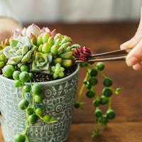 【連載】GreenSnap×キナリノ「グリーンや花をもっと身近に 」Vol.3 多肉植物の寄せ植え