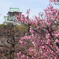桃色に染まった風景に魅せられて……近畿地方(京都・大阪)での梅の名所11選
