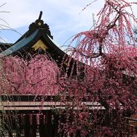 桃色に染まった風景に魅せられて……近畿地方(奈良・三重・兵庫・滋賀)での梅の名所10選