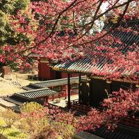 桃色に染まった風景に魅せられて……中部地方での梅の名所10選