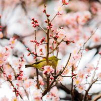 桃色に染まった風景に魅せられて……関東地方(東京)での梅の名所9選