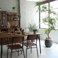 お部屋に《グリーン》を取り入れよう♪ 初心者さんでも育てやすい定番「観葉植物」4選
