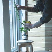 新しい年に始める《グリーンのある暮らし》。おすすめグリーンと飾り方イロイロ