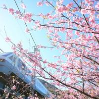 一足早い「春」を求めて♪《伊豆》のおすすめ温泉宿5選【桜まつり情報付き】