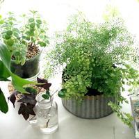 おうちのグリーンが元気に春を迎えるために。観葉植物の「冬のお手入れのコツ」特集