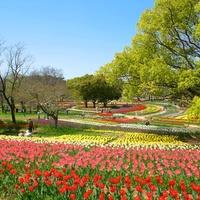 春爛漫とした陽気に包まれて…近畿地方のチューリップ畑を訪れませんか?