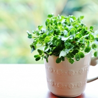 今日から始める水耕栽培♪ 「キッチン菜園・リボベジ」のススメ
