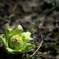 自然がもっと愛おしくなる。「二十四節気」を意識して、季節を感じる一年に。