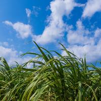 沖縄のちいさな宿。そこにあったのは豊かな自然と温かい人のぬくもりでした。