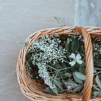 可憐な春の草花をさりげなく飾ってみませんか?【人気ブロガーさんに学ぶディスプレイ術】
