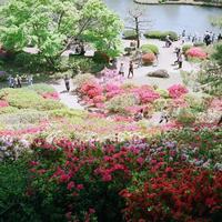 色鮮やかに染まる景色に魅せられて~晩春を彩るつつじの名所/東京都編~