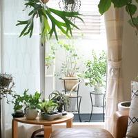 この春からはじめる「グリーンのある暮らし」。お部屋ごとに適したインテリア実例集