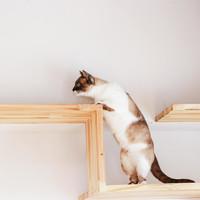 猫の幸せそうな顔がみたい♪賃貸でもOKなキャットウォークDIY&リノベアイデア集
