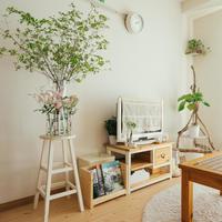 なにを選んで、どう飾る?観葉植物の【置き方・選び方・育て方】のコツ♪