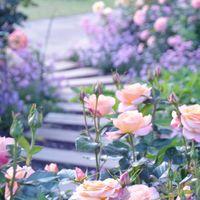 ナチュラルな庭が好き。ありのままの自然を愛する「イングリッシュガーデン」の作り方