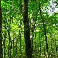 豊かな森と湖が織りなす世界遺産 青森県・秋田県~白神山地でのみどころ~