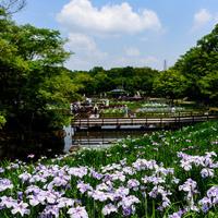 梅雨を彩る気高く美しい花々に魅せられて 近畿地方の花菖蒲・杜若の名所(大阪・京都編)