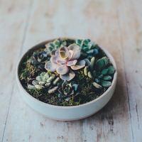 """【寄せ植え】で造る小さな""""庭""""。育てやすい多肉植物「セダム」で始めよう!"""