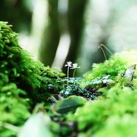 しっとりと佇む、美しい緑の世界へ。苔(コケ)旅に出かけてみませんか?