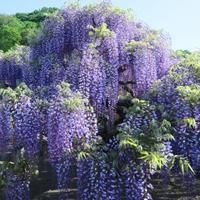 絶景広がる色とりどりの花♪GWに行きたい「花旅スポット」8選@関東
