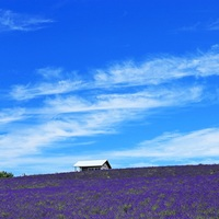 初夏の爽やかな景色と香りに魅せられて ~北海道でのラベンダーの名所~