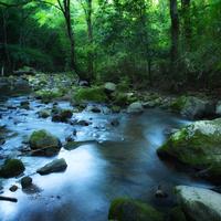 魅力は温泉だけじゃない。新緑の季節に訪れたい『箱根』のパワースポット7選