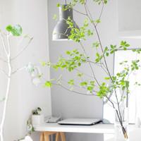 お部屋でも季節を感じて…四季折々の「枝もの」をインテリアに取り入れよう